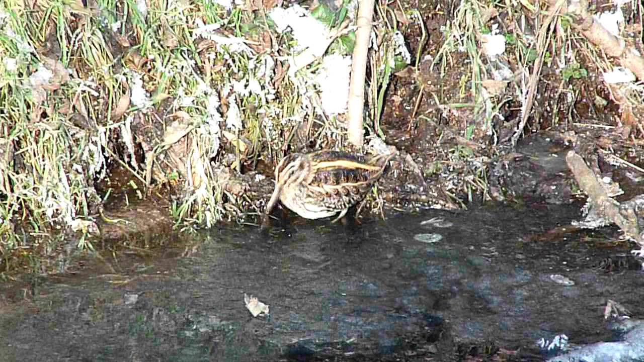 Embedded thumbnail for The Netherlands: Jack Snipe - Dancing!